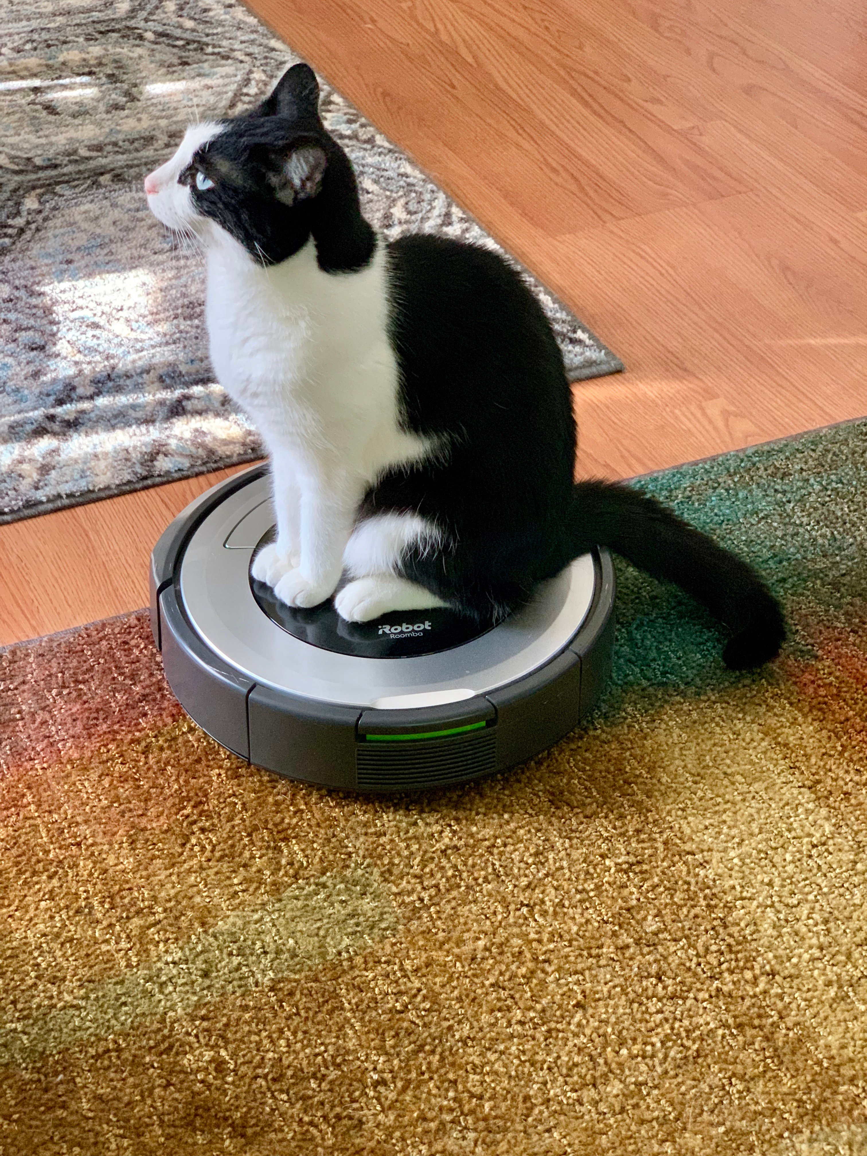 Super Is Roomba The Best Robot Vacuum Findreviews Download Free Architecture Designs Scobabritishbridgeorg